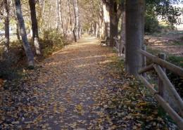 noviembre-camino-de-oro
